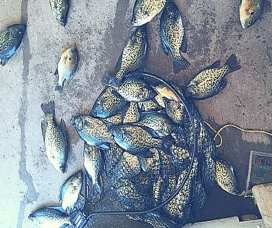 Crappie Fishing Guides Brainerd